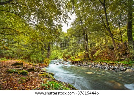 Mountain river in fall forest with red yellow leafs and green grass in evening - stock photo