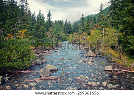 mountain river in the forest - stock photo