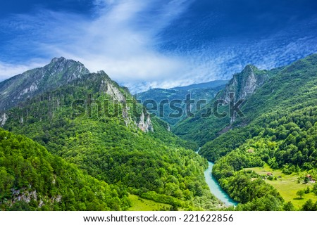 Mountain river Tara and forest in Montenegro - stock photo