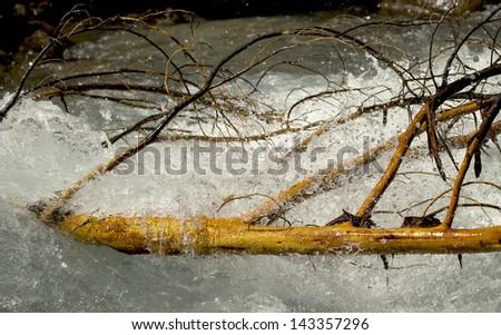 mountain river water through a fallen tree - stock photo