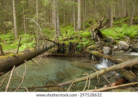 Mountain river with a small cascade in pine forest - stock photo