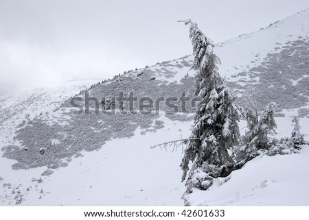 Mountain slope with road and a lone fir tree - stock photo
