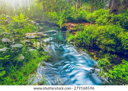 Mountain stream in green forest. Carpathians, Ukraine - stock photo