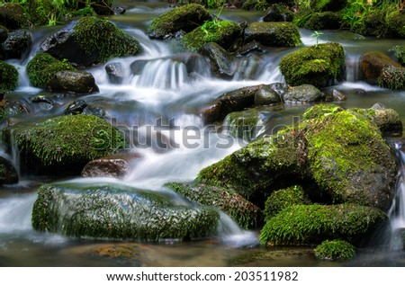 mountain stream surrounded by green forest, Slovakia