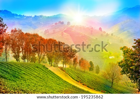 Mountain sunshine rainy of beautiful with colorful trees - stock photo
