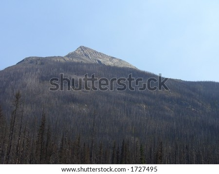 Mountain surrounded by dead tree's, killed by the pine beatle - stock photo