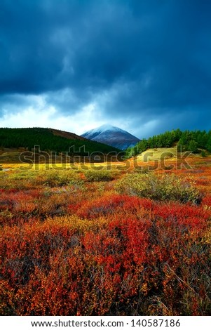 mountain top in a taiga with a red bush - stock photo