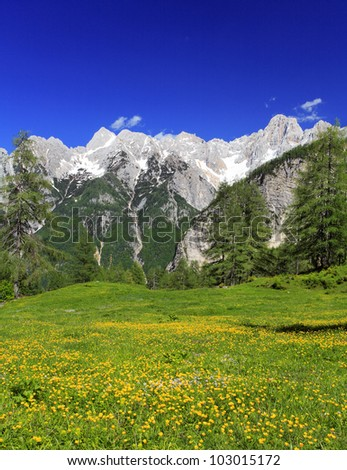Mountain tops and a meadow with flowers