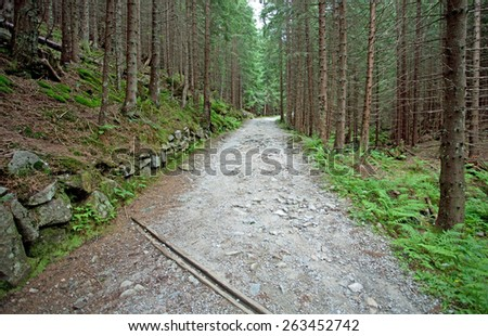 Mountain trail at the forest, Tatry, Poland - stock photo
