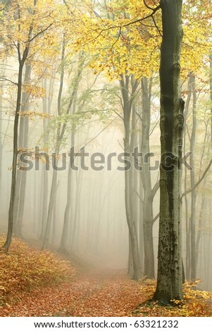 Mountain trail in the misty autumn forest in a nature reserve. - stock photo