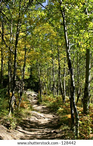 Mountain Trail Through Aspen Trees - Rocky Mountain National Park - stock photo