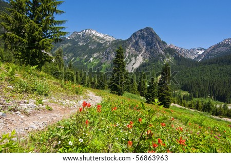 Mountain wildflowers landscape off of a hiking trail in western Washington on a beautiful sunny day.