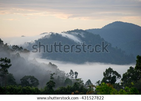 Mountain with fog in the morning.Forested  slope in low lying cloud with the evergreen conifers shrouded in mist in a scenic landscape view.