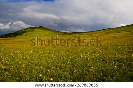 Mountain yellow flower field with cloudy sky and sunny foreground - stock photo
