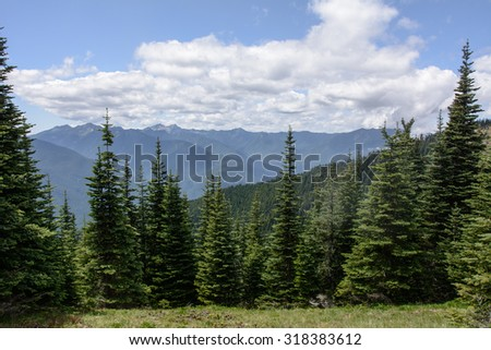Mountains in Olympic National Park, WA - stock photo