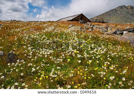 mountains landscape and flowers - stock photo