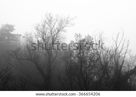 Mountainside with trees in the dense fog. Forest in the fog. - stock photo