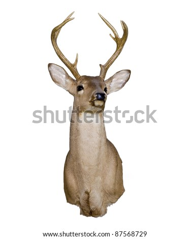 Mounted deer head isolated on white - stock photo