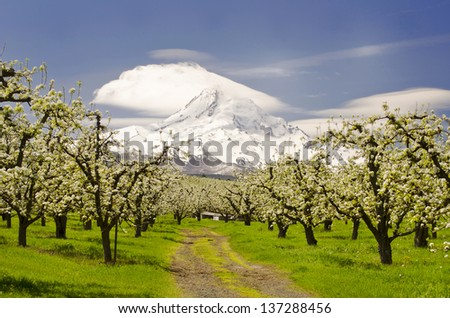 Mounthood and hoodriver valley - stock photo