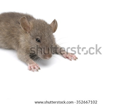 Mouse - stock photo