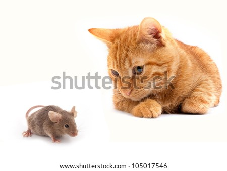 Mouse and cat isolated on white background - stock photo