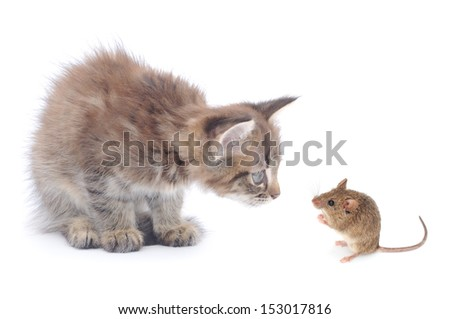 Mouse and kitten isolated on white background  - stock photo