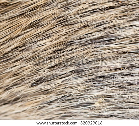 mouse fur as background - stock photo