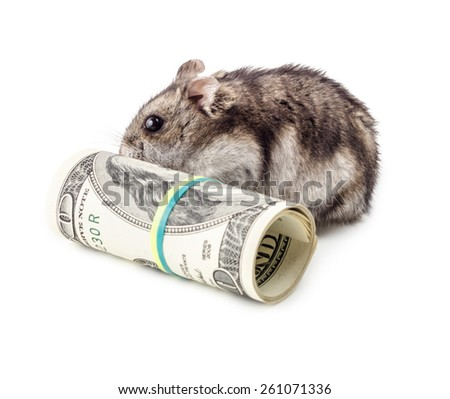 Mouse gnaws money isolated on white background. Concept of devaluation, recession and financial collapse. - stock photo