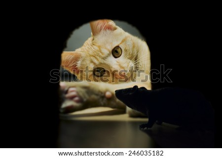 mouse hidden in his lair while the cat hunts - stock photo