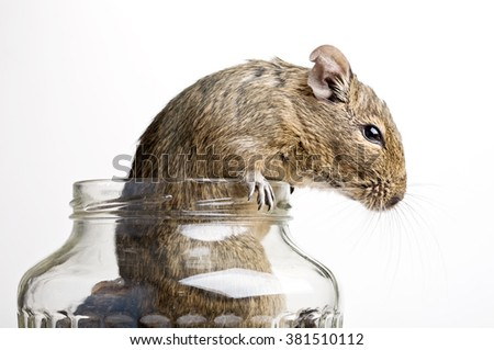 mouse in glass jar studio closeup isolated on white - stock photo