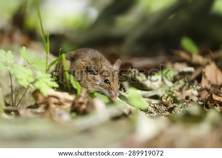 mouse in the grass - stock photo