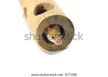 Mouse in tube - stock photo