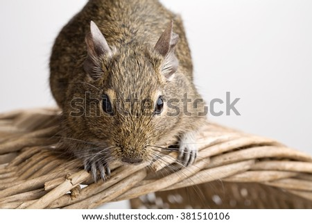 mouse on basket closeup front view isolated on white - stock photo