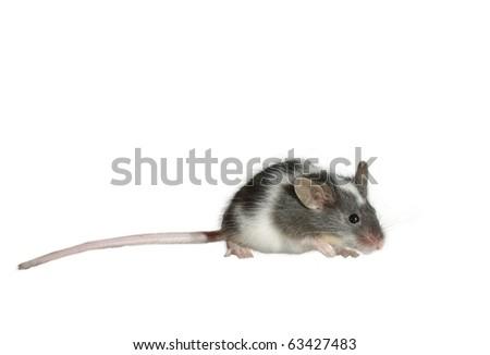 mouse on white background - stock photo