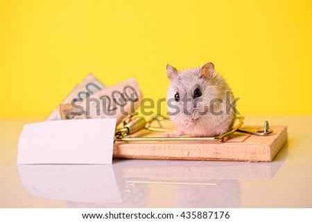 Mouse with money for cheese Mouse takes the money from the trap for cheese. White paper is ready for text  Shoot in home studio in Belgrade.