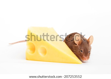 Mouses with a big slice of swees cheese, isolated on white - stock photo