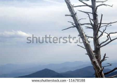 Moutain landscape showing dead tree from acid rain - stock photo