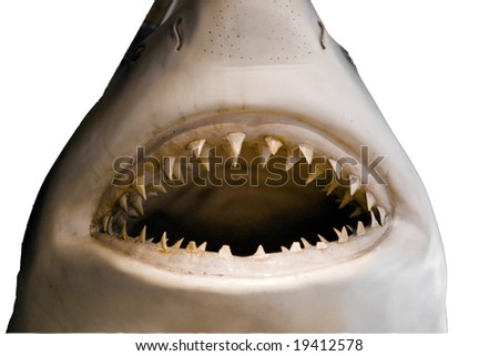 Mouth and teeth of a great white shark - stock photo
