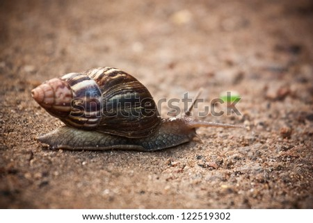Moving at a snail's pace - stock photo