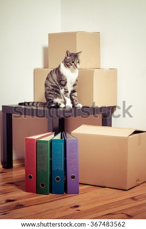 Moving day - cat and cardboard boxes with table and files in room - stock photo