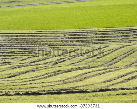 Mowed meadow - stock photo