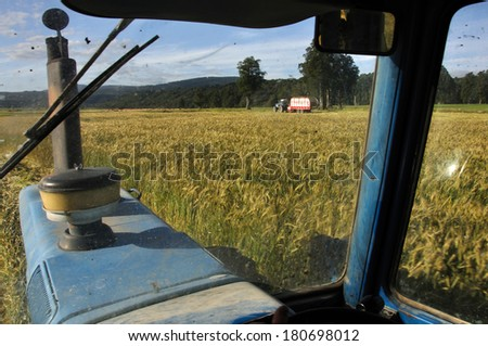 Mowing triticale grown for silage while the wagon pics up the crop, West Coast, New Zealand - stock photo