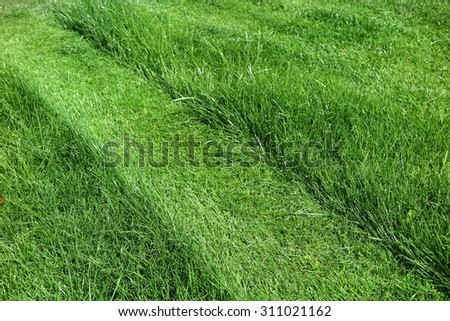 Mown lawn lane among unmown lawn in the sunny summer garden - stock photo