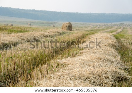 mown straw and stacks of hay on the field in the summer day