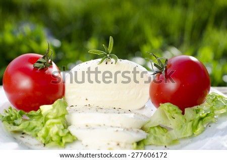 Mozzarella with salad and tomatoes on a green background