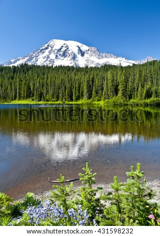 Mr Rainier and Reflection Lake with wildflower - stock photo