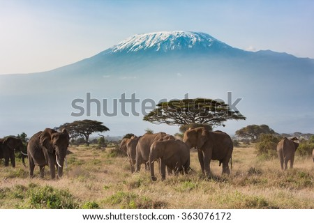 Mt. Kilimanjaro from Amboseli National Park - stock photo