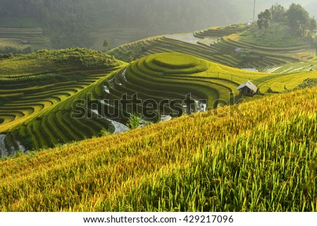 Mu Cang Chai is a rural district of Yen Bai Province, in the Northeast region of Vietnam. The most of area is rice terrace.The paddy turns golden in september of each year.