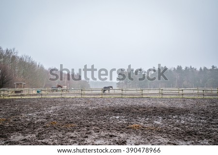 Muddy field with fenced horses at autumn - stock photo