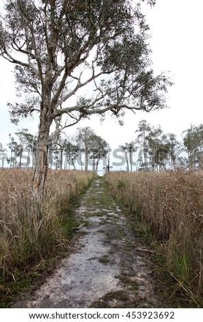 Muddy track leading to beautiful Lake Weyba, Queensland, Australia - stock photo
